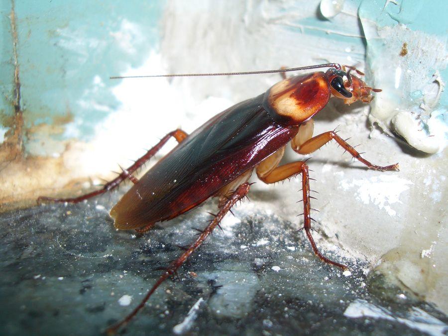 oh-no-a-big-gross-roach